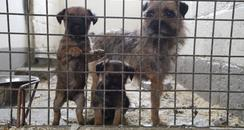 Photo from RSPCA of puppies in Kent case