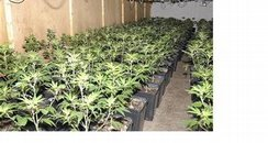 Rushden Cannabis Factory