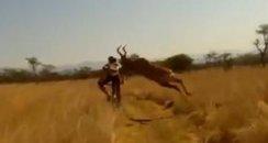 buck bowls over biker in africa