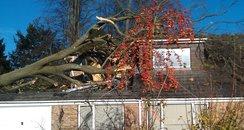 Winchester fallen tree