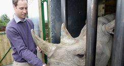 Rhino at Port Lympne