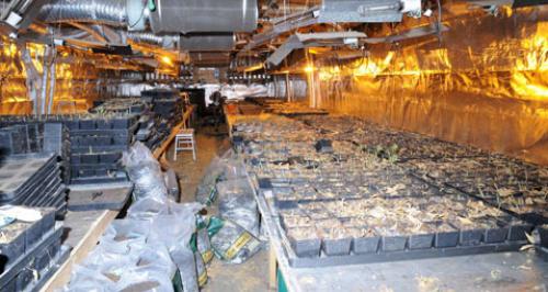 Wisbech Cannabis Factory