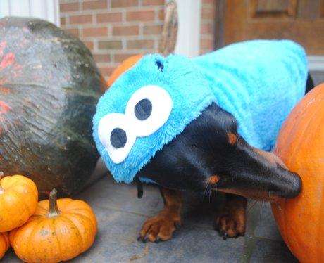 Cookie Monster Dog Costume Uk