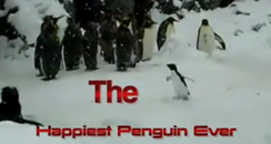 Happiest Penguin Ever