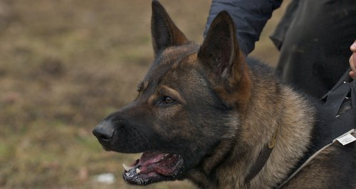 A police dog has died during a training exercise