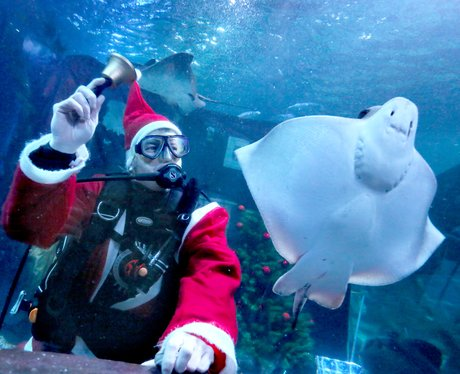 diver as santa with manta ray