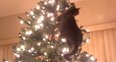 grey cat climbing tree