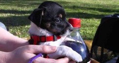 A puppy dog and a coca cola bottle