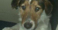Stolen St Albans Dog