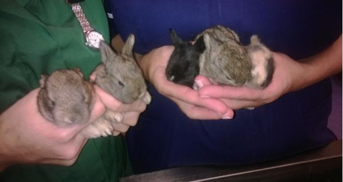 Bunnies dumped in Soham