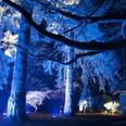 Westonbirt Christmas