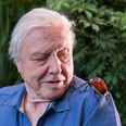 David Attenborugh and a bug