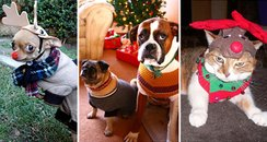 Pets in Christmas costumes canvas