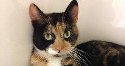 Freida Cat