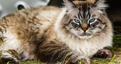 cat laying in grass