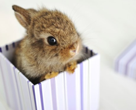 A bunny sits in a gift box