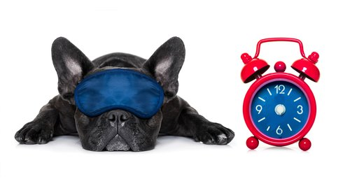 Dog with eye mask on and alarm clock