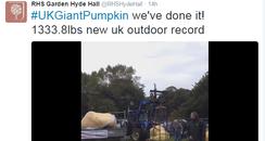 pumpkin record